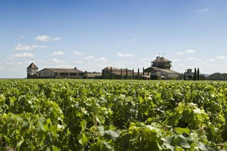Weißwein aus Bordeaux